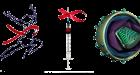 Hoćemo li uskoro vidjeti cjepivo za HIV?