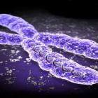 Genska terapija kao prevencija HIV infekcije