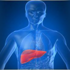 Matične stanice i jetra