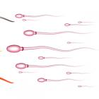 Mnogi muškarci s nemjerljivom razinom HIV-a u krvi još uvijek imaju nisku razinu u spermi