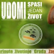 Azil Dumovec na Pozitivnom koncertu