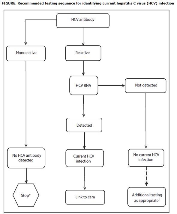 HCV smjernice