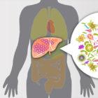 Virusni hepatitisi